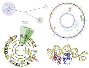 Genética microbiana