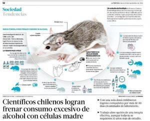 Científicos chilenos logran frenar consumo excesivo de alcohol con células madre