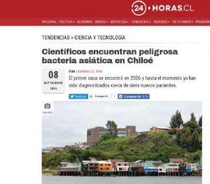 Científicos encuentran peligrosa bacteria asiática en Chiloé