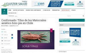 Confirmado. Tifus de los Matorrales asiático hizo pie en Chile