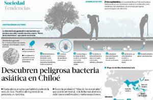Descubren peligrosa bacteria asiática en Chiloé